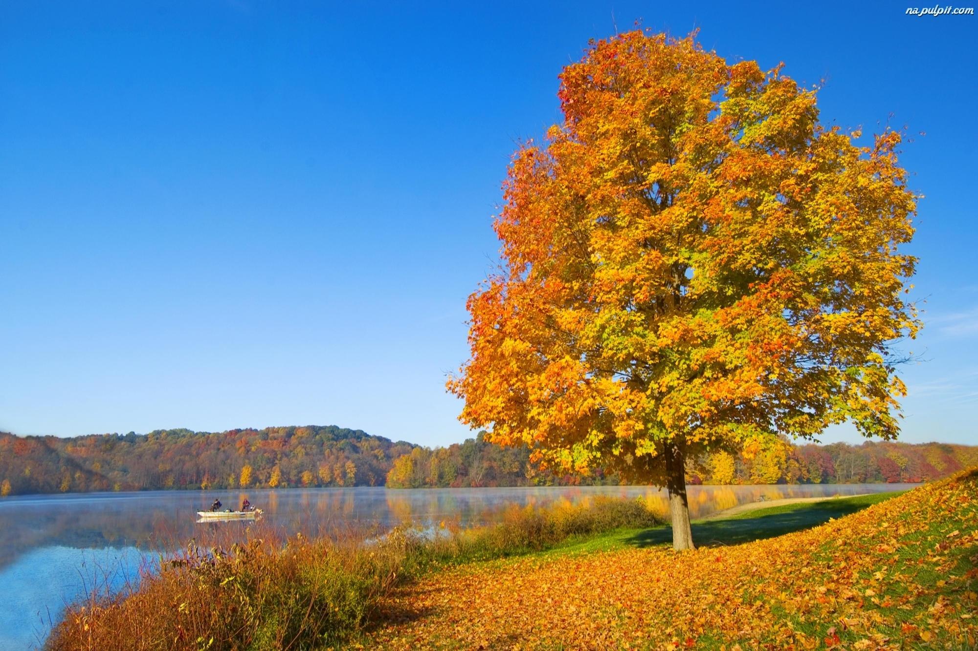Li cie drzewo jesie jezioro na pulpit for Wallpaper hd paesaggi